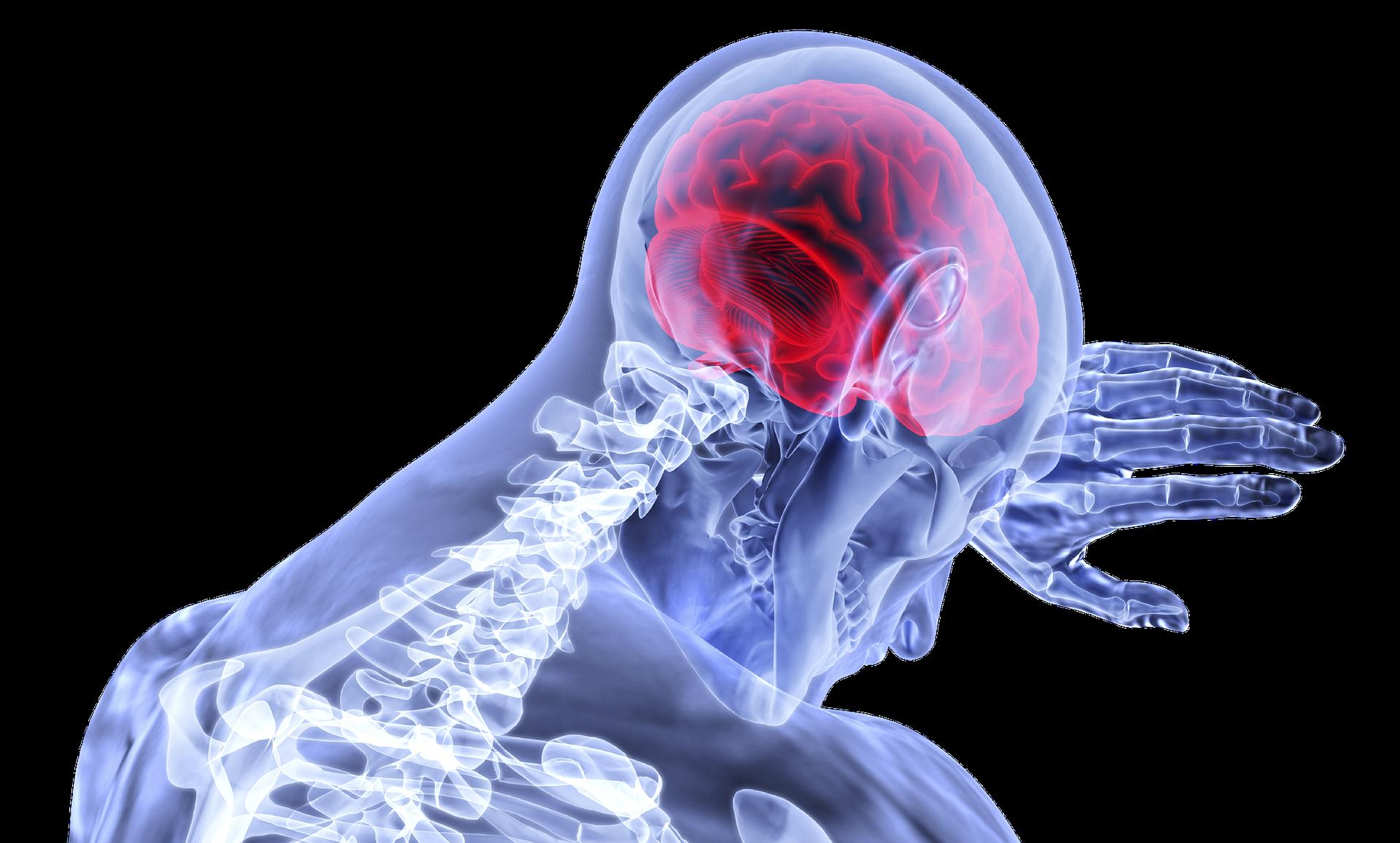 Višak masnog tkiva oko pojasa povezan s manjim volumenom mozga?
