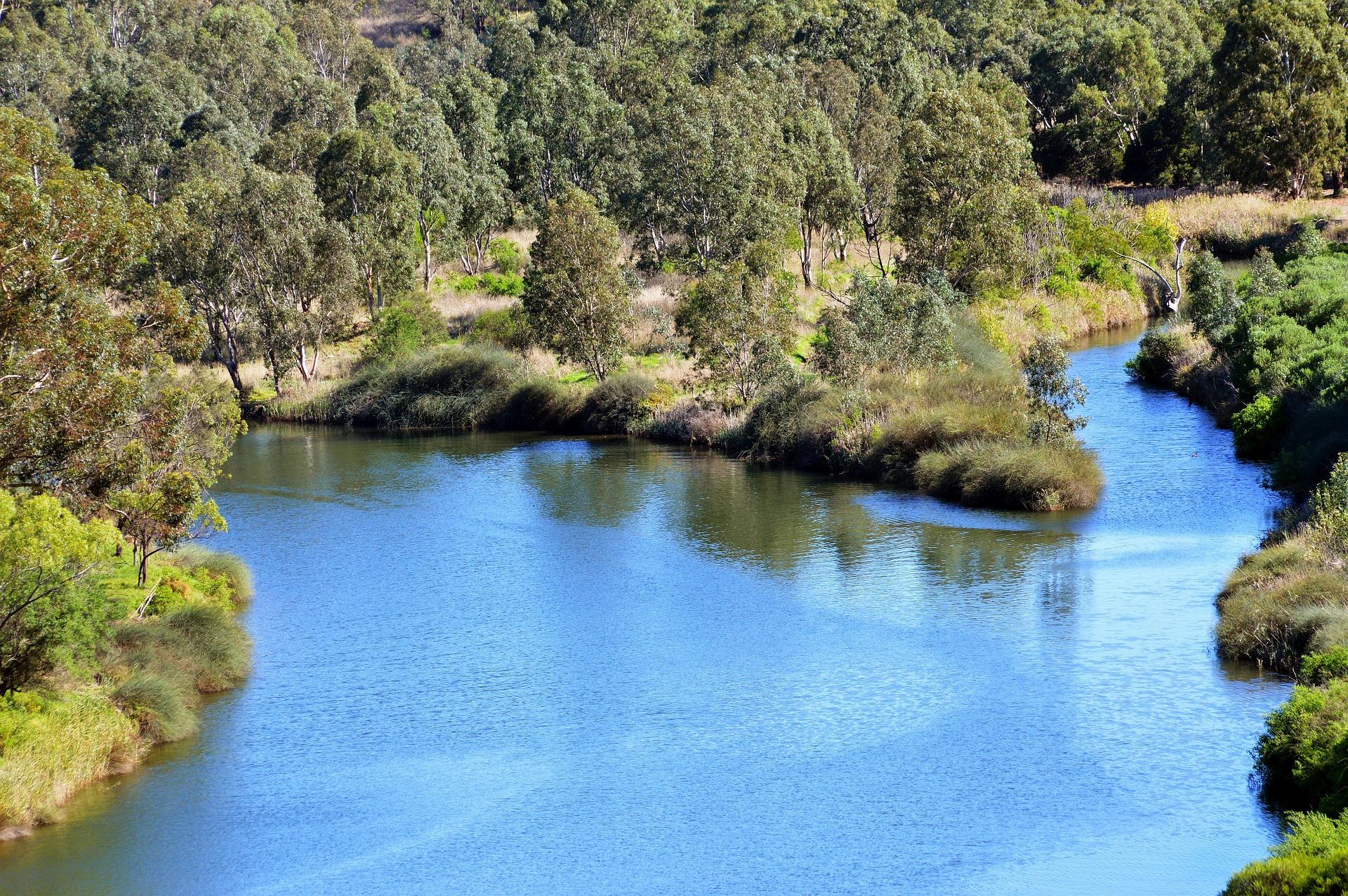 Pomor stotina tisuća riba u australskoj rijeci Darling