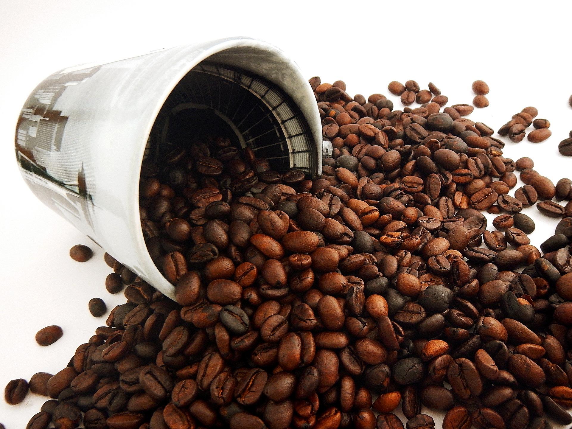 Ugroženo 60 posto vrsta divlje kave