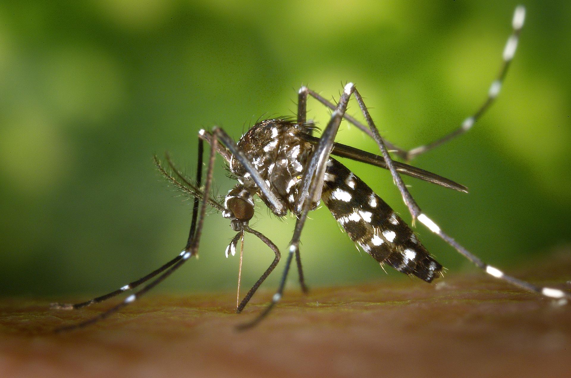 'Kontrolom rađanja' komarica znanstvenici žele spriječiti epidemije malarije i drugih bolesti