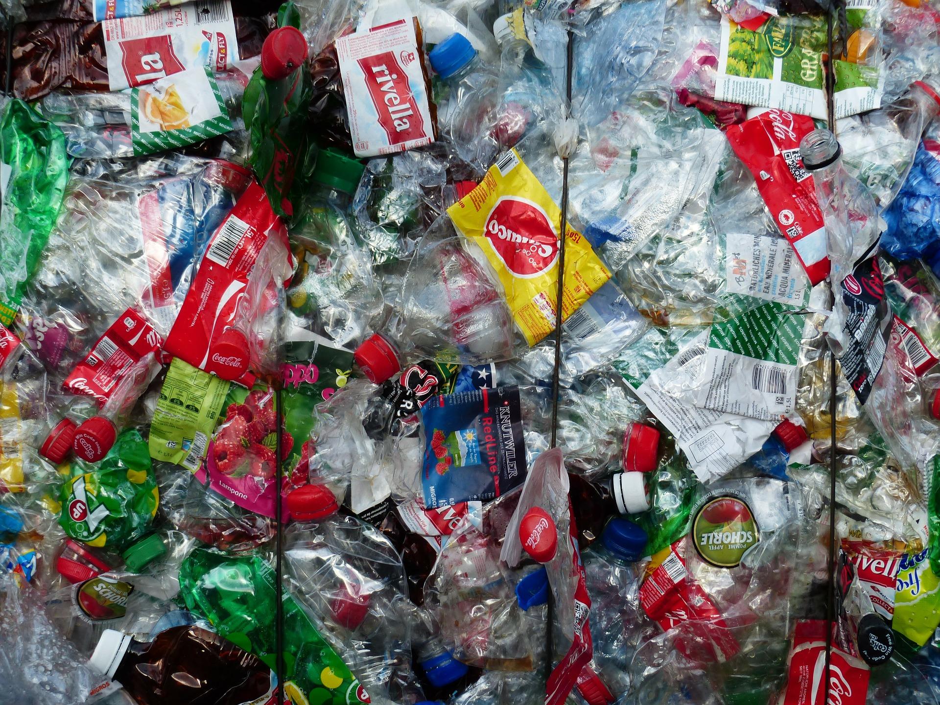 U ptičjim jajima u arktičkim kolonijama pronađene kemikalije iz plastike