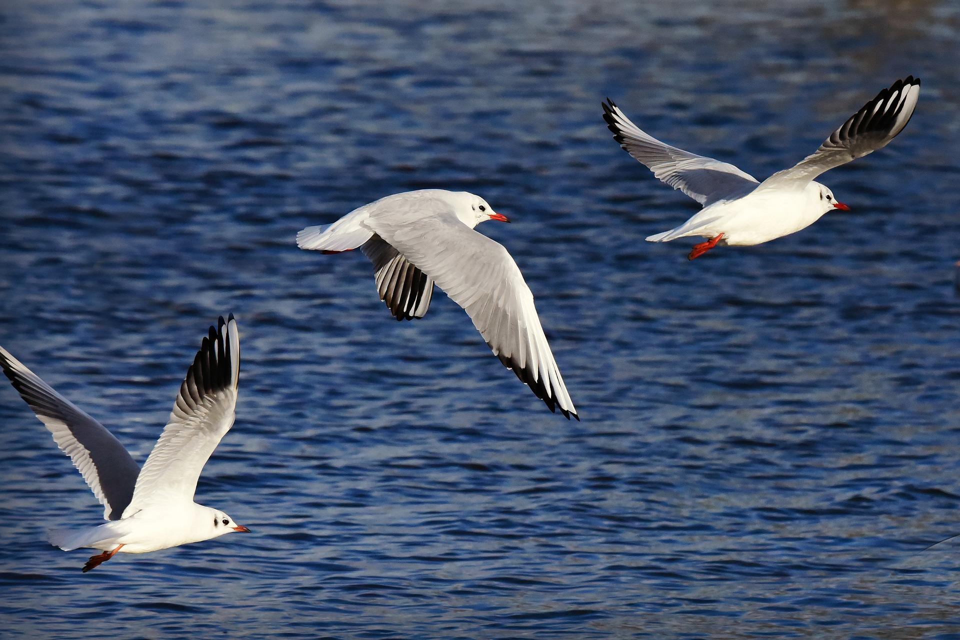 Istraživanje: Najsmrtonosniji otpad za morske ptice su baloni
