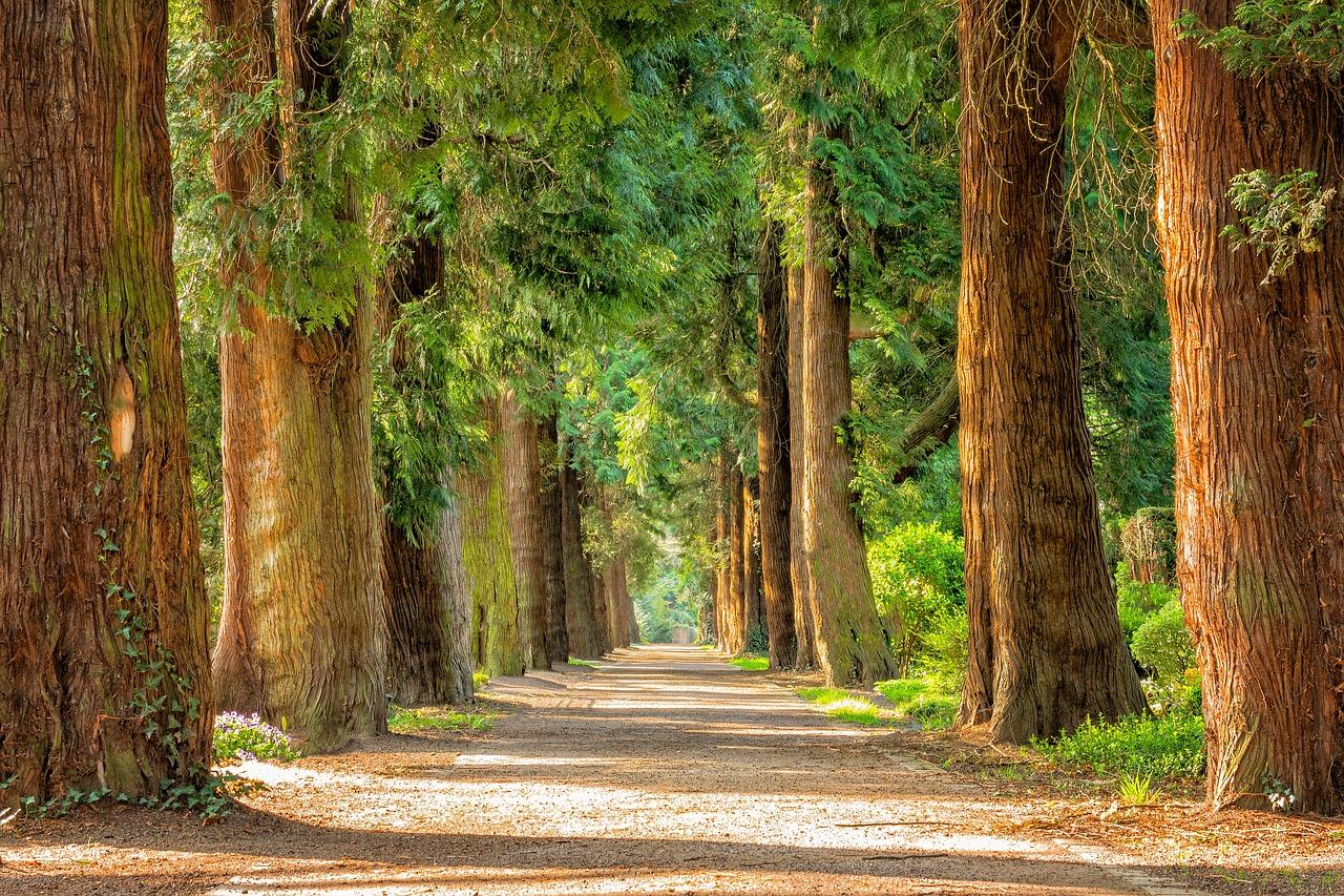Utjecaj šetnje prirodom na zdravlje je nevjerojatan