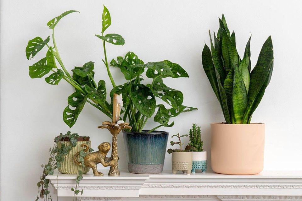 NASA je napravila listu biljaka koje najbolje čiste zrak u prostoriji