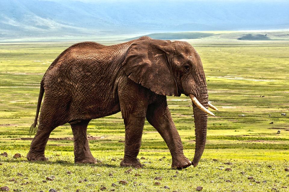 Zvuk pčela udaljava slonove od željezničkih pruga