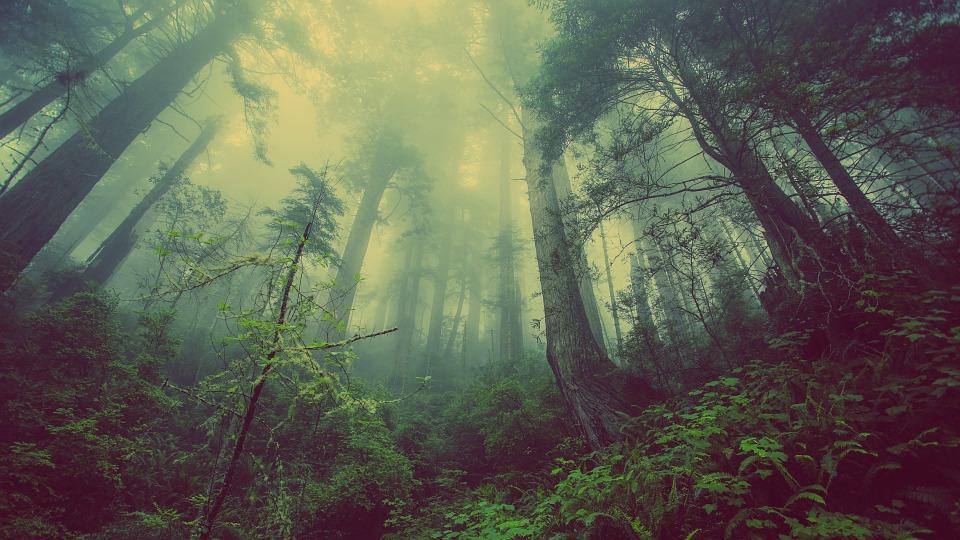 Rješenje za klimatske promjene se možda skriva u obnovi šuma