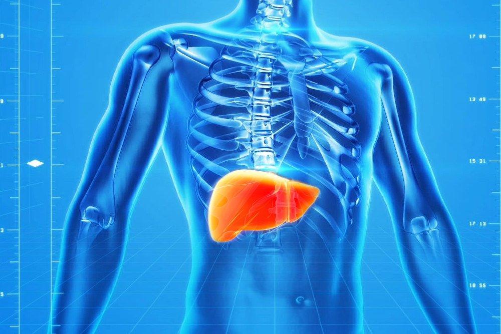 Otkriven novi tip stanica koji bi mogao poboljšati regeneraciju jetre