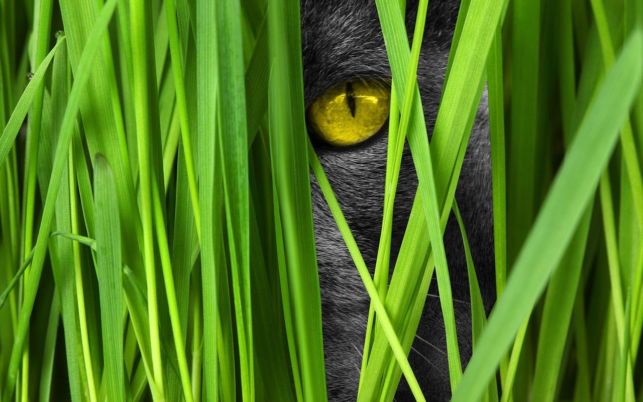 Zašto mačke jedu travu?