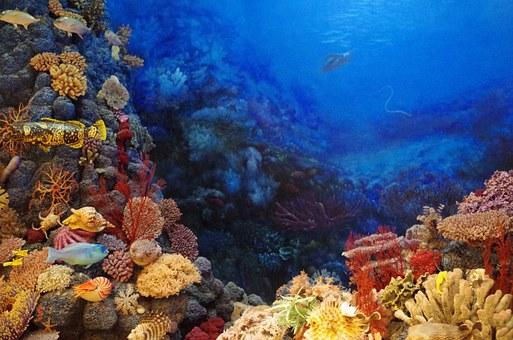 Znanstvenici uspjeli potaknuti umjetno razmnožavanje koralja