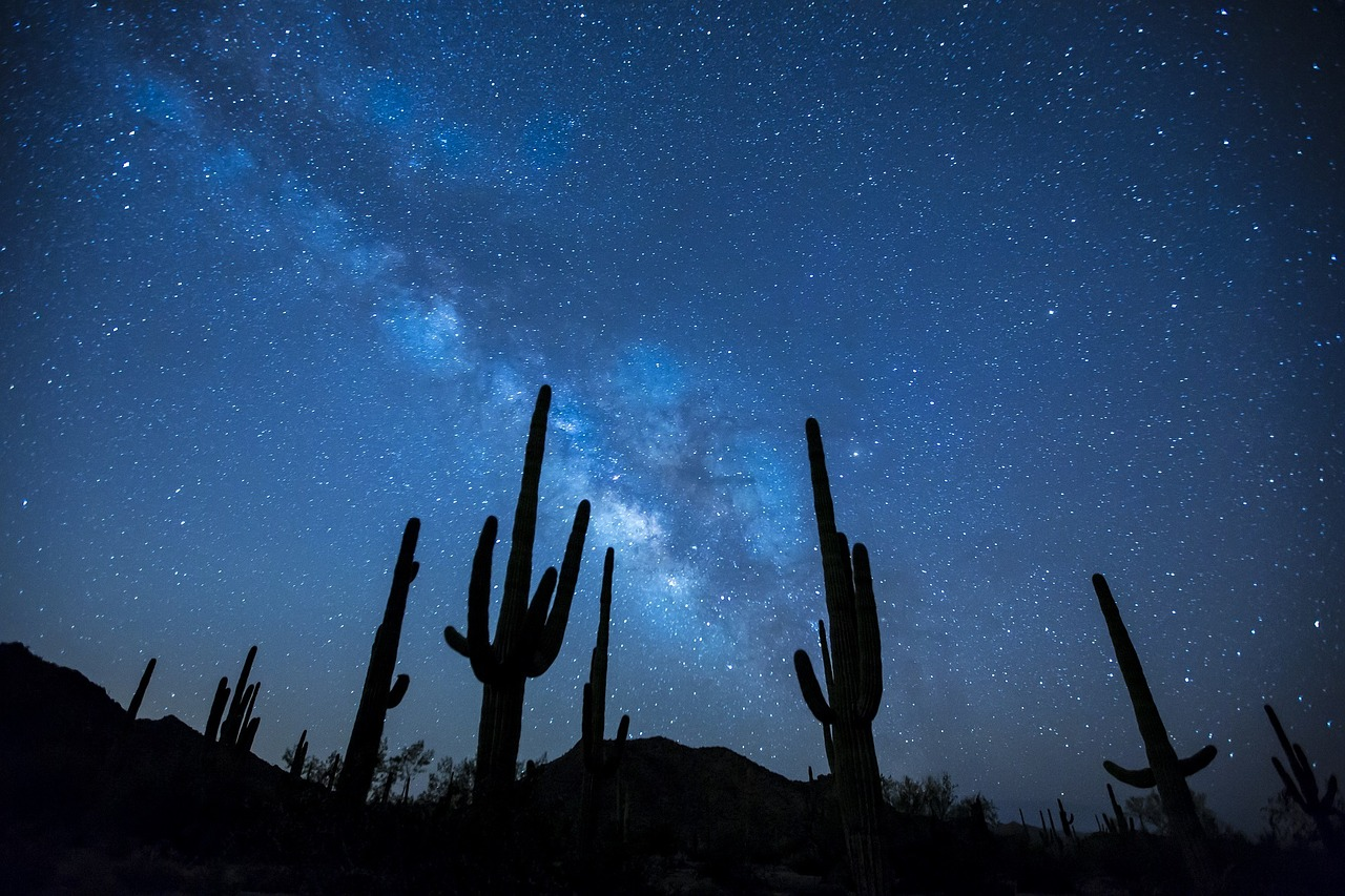 Pustinjski kaktus u borbi protiv nerazgradive plastike