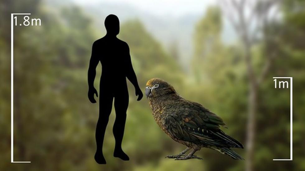 Otkriveni ostaci papige teške 7 kilograma