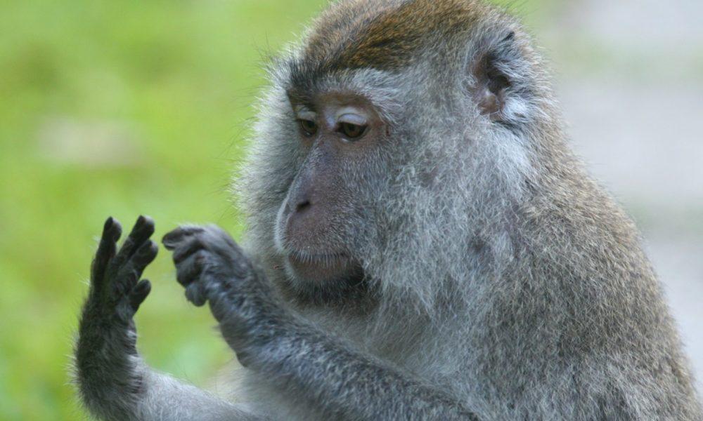 Jesu li životinje sposobne za računanje?