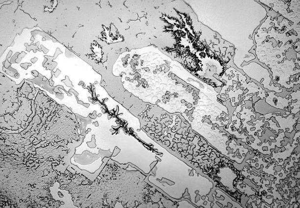 Mikroskopska struktura ljudskih suza