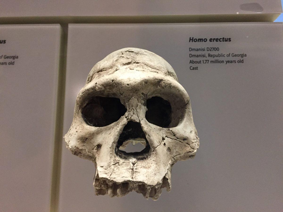 Posljednji Homo erectusi nestali su prije 110.000 godina