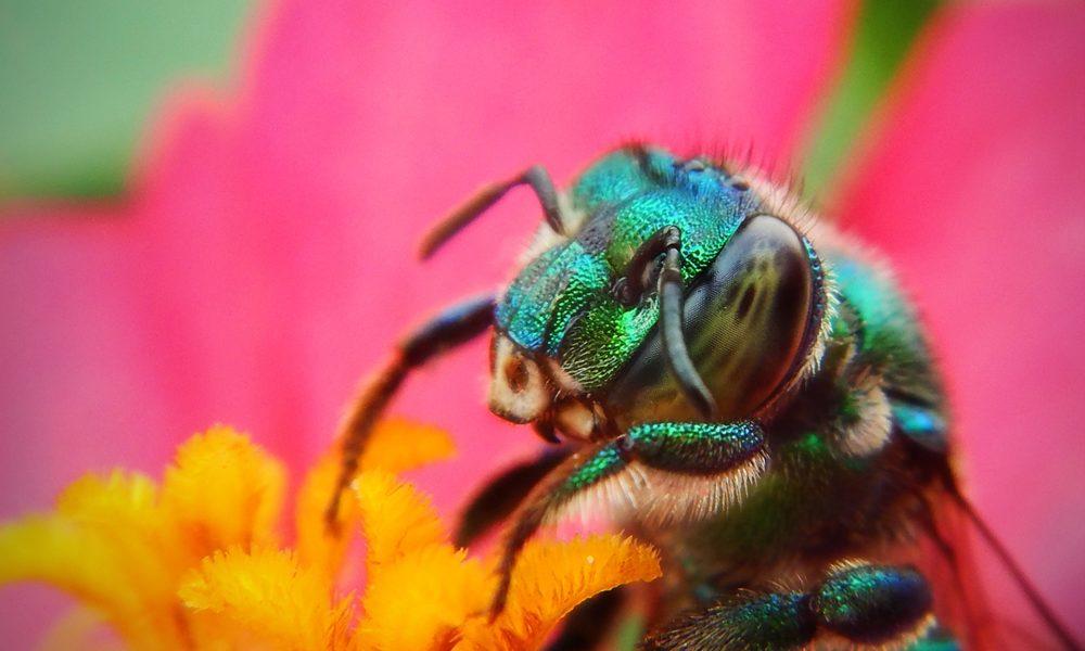 Zelene odluke za 2020: Tri stvari koje biste mogli napraviti u vrtu za spas planeta