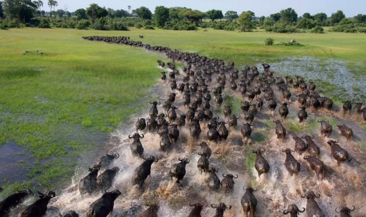 Dvadeset fotografija migracija životinja koje oduzimaju dah