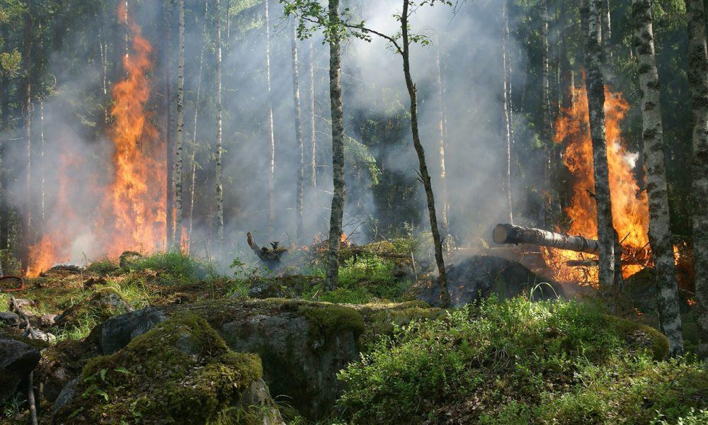 Razorni požari u budućnosti bi mogli postati uobičajeni, upozoravaju znanstvenici